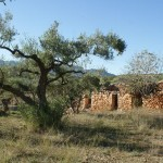 Productive olive grove with ruins and valley views Ref:R647 at  for